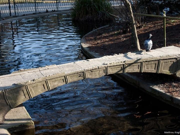 Pont Vicat jardin des plantes